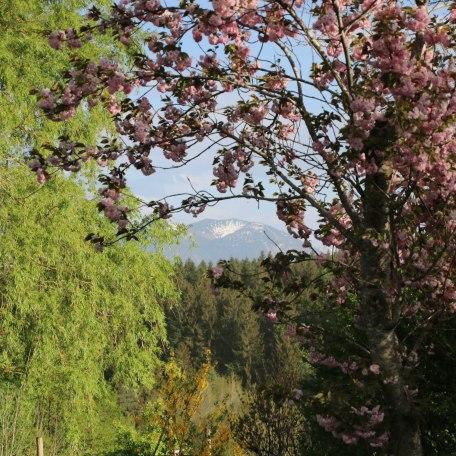 Ferienhaus Enke Garten im Frühling, © im-web.de/ Alpenregion Tegernsee Schliersee Kommunalunternehmen